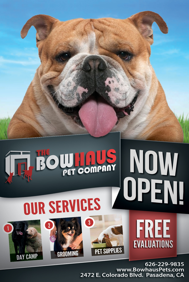 Pet Daycare Company Flyer Design